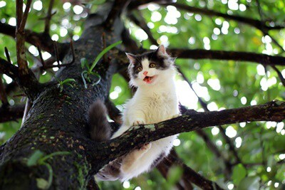 how to get a cat out of a tall tree without a ladder