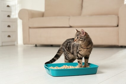 how to hide a cat litter box in small apartment