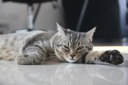 how to keep indoor cats cool in hot weather