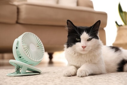 indoor cats and hot weather