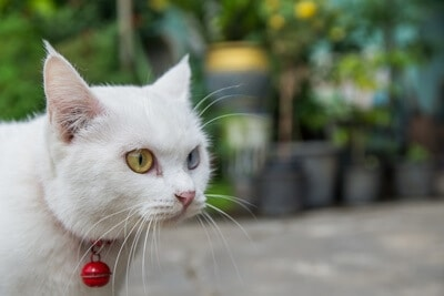 is a cat collar with bell good or bad?