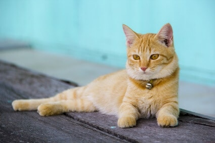 safe cat collars with bells