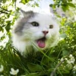 safe temperature for cats indoors