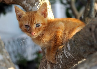 what to do if a cat is stuck in a tree