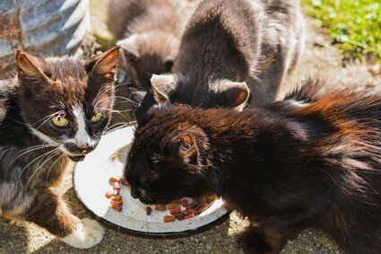 what to feed an older cat that is losing weight