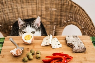 can cats eat cooked eggs?