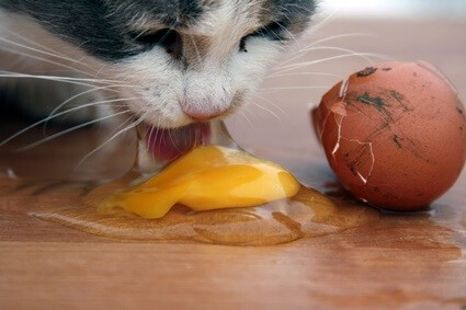 can cats eat raw eggs?