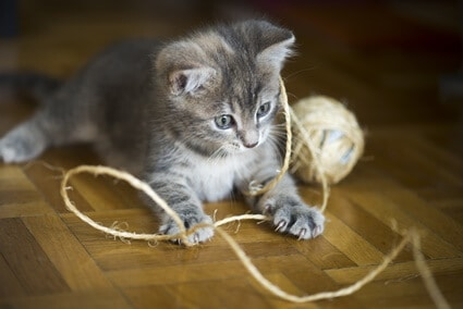can cats poop out string?