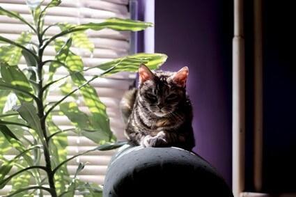 cat behaviour change with age