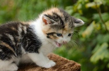 cat meow sounds like baby crying