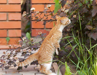cats sense of smell gone