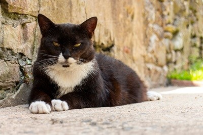 do cats get cranky when they get older?