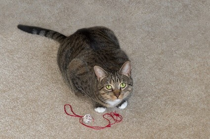 how to get string out of a cat