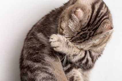 what can i give my cat for a headache?