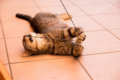 what happens if cats eat string?