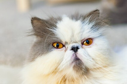 why do cats get grumpy as they get older?