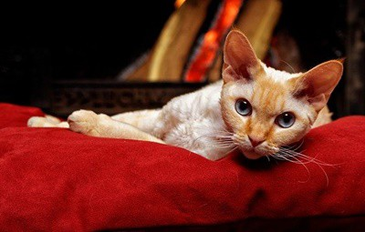 will cats stay away from the fireplace?