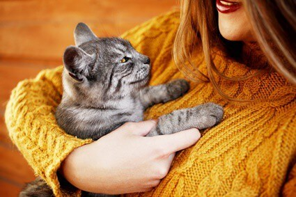 are cats like their owners?