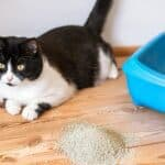 can cats be allergic to litter dust?