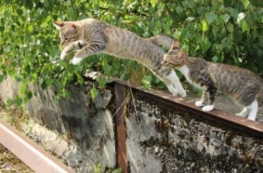 can cats jump higher than dogs?