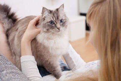 cat mirroring behavior of owner