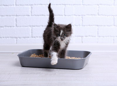 cat tracking poop all over house