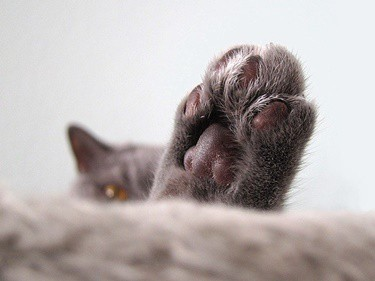 cats paws turning pink