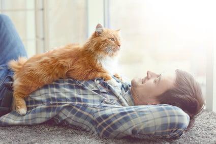 do cats copy human behavior?