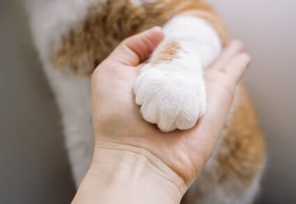 do cats like their paw pads touched?