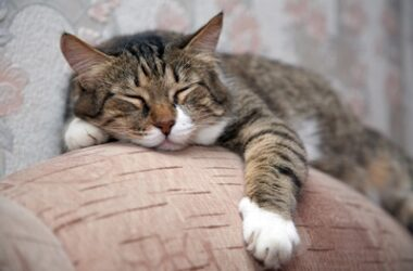 do cats sleep more when they get older?