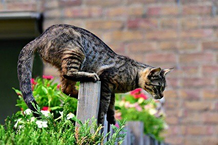 how high can cats jump vertically?