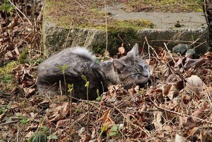 neighbors cat poops in my yard