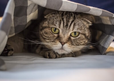 what causes stress and anxiety in cats