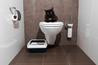 why do cats drink from toilets?