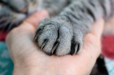 why do cats get mad when you touch their paws?