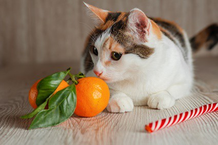 are orange peels bad for cats?