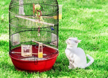 can cats and birds be friends?