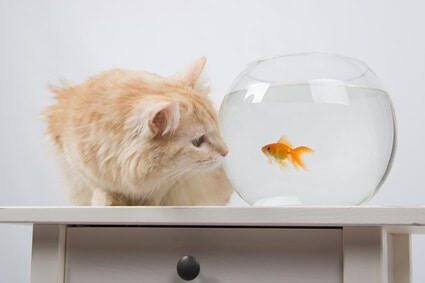 can cats and fish live together?