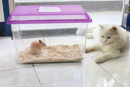 can cats and hamsters be friends?