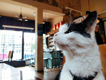 can cats be farsighted?