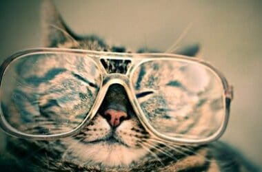 can cats have bad eyesight?