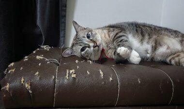 cat scratch deterrent for leather furniture