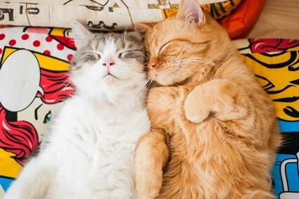 do cats like living with other cats?