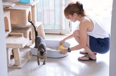 how to keep your house from smelling like cats