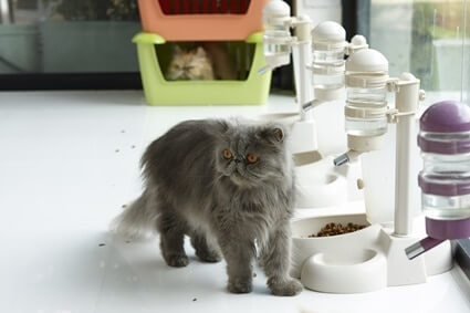 why do cats not like water near their food?