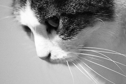 why do cats snort when angry?