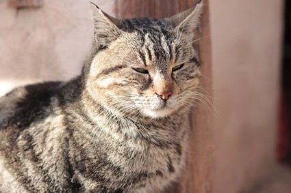 cat no longer purring