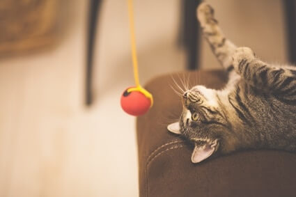 how to make your cat happy indoors