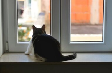 reasons-to-keep-cats-indoors