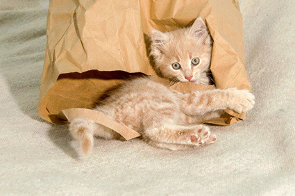 why do cats like paper bags?
